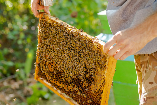 5 Steps You Should Take for Beehive Removal: